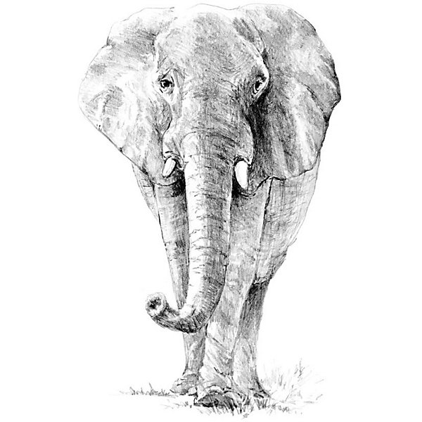 Купить SKBN16 Эскиз Слон , Royal&Langnickel, Швейцария, Унисекс