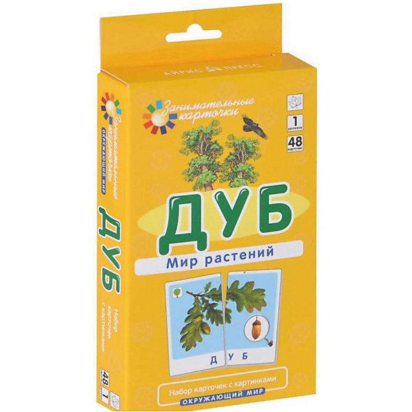 АЙРИС-пресс Обучающие карточки Мир растений Дуб
