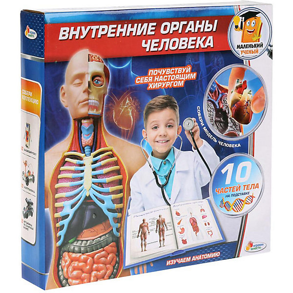 Играем вместе Анатомический набор Играем вместе Маленький учёный: внутренние органы printio внутренние органы