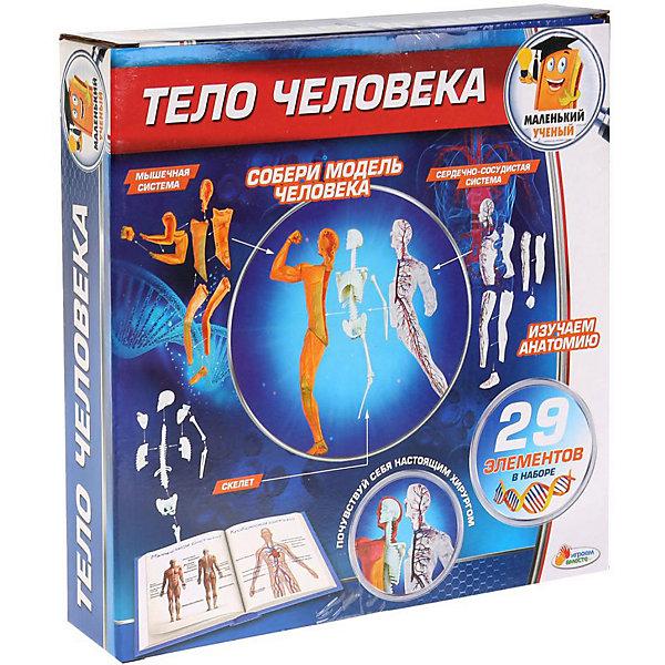 Фото - Играем вместе Анатомический набор Играем вместе Маленький учёный: тело человека набор играем вместе маленький ученый фабрика слизи tx 10017