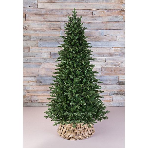 Triumph Tree Ель стройная Triumph Tree Шервуд Премиум, 215 см